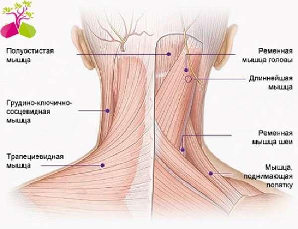 Болит шея — Основные причины и методы лечения при болях в шее, советы врачей