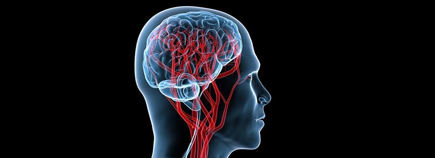 Допплер узи сосудов головного мозга и шеи