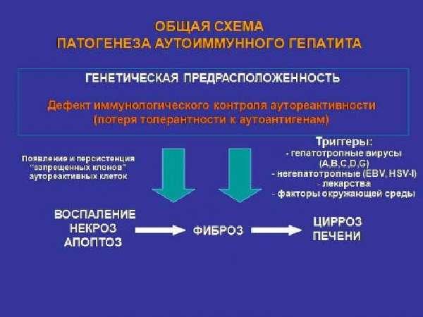 Механизм развития аутоиммунного гепатита