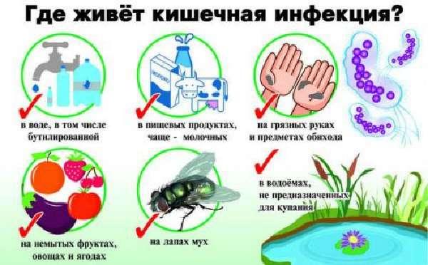 Источник кишечной палочки