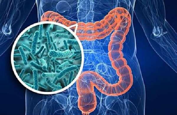 Бактерии толстого кишечника