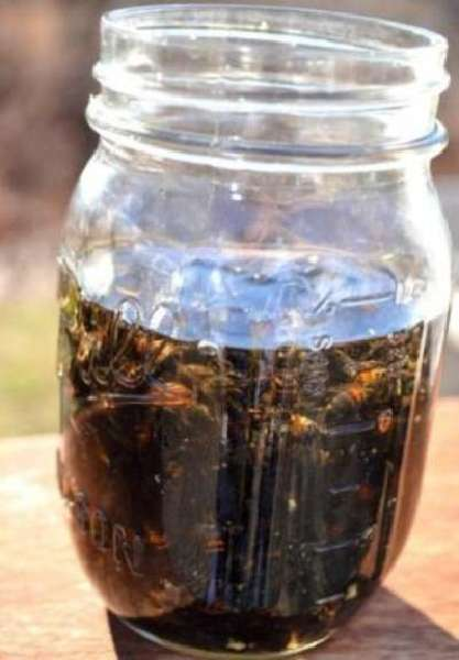 Настойка на пчелином подморе на спирту