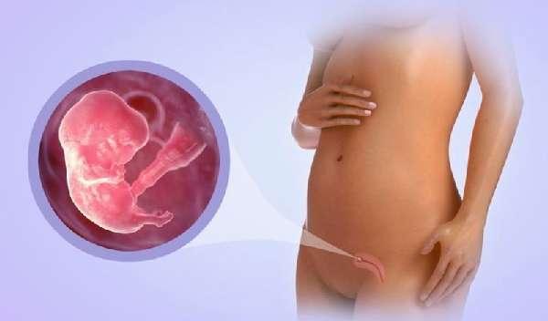 Ранний срок беременности