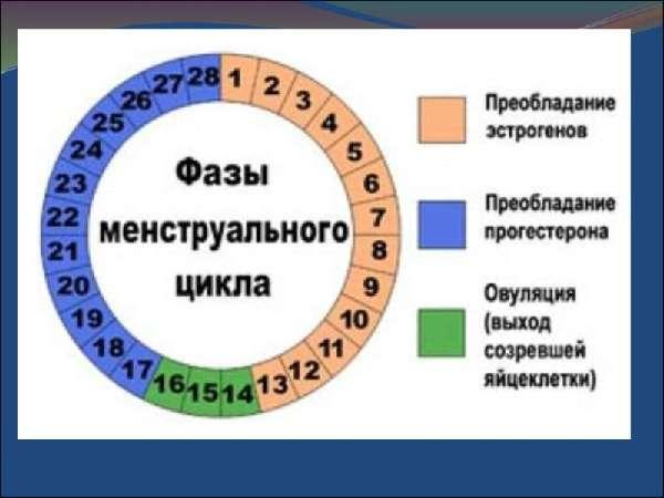 определение фазы менструального цикла