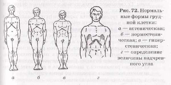 Нормы грудной клетки