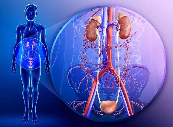 воспаления в органах мочеполовой системы