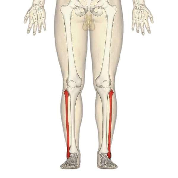Длинная кость
