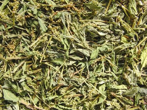 листья водяного перца