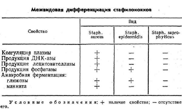 Особенности стафилококковой инфекции