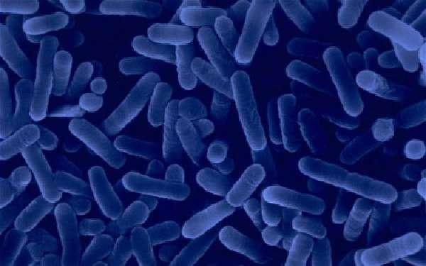 Инфекционные агенты
