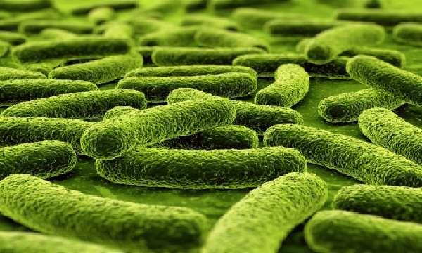 Причины заражения микобактерией