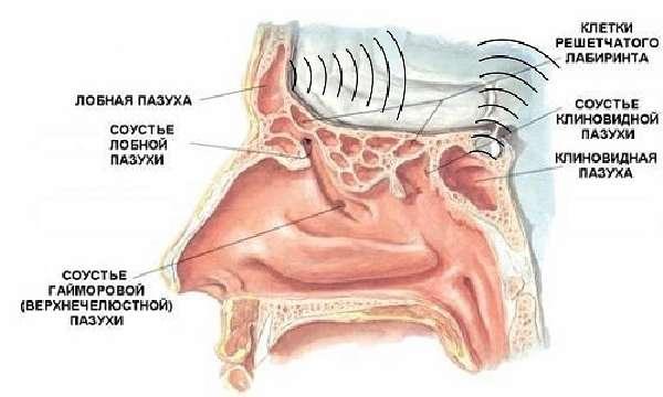 Диагностирование сфеноидита