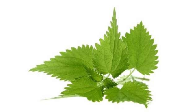 Гомеопатия и лекарственные травы