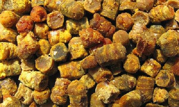 Возможности использования пчелиных продуктов(перга)