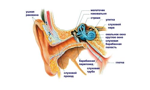 Что приобрести в аптеке, когда беспокоят боли в ушах? фото