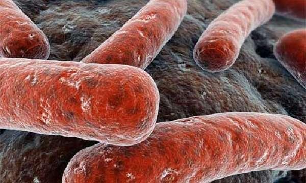 Возбудитель диссеминированного туберкулеза